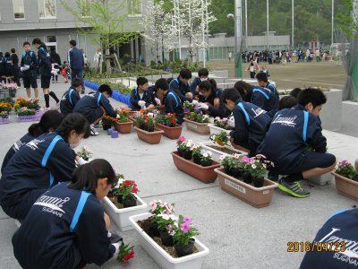 プランターの花植え